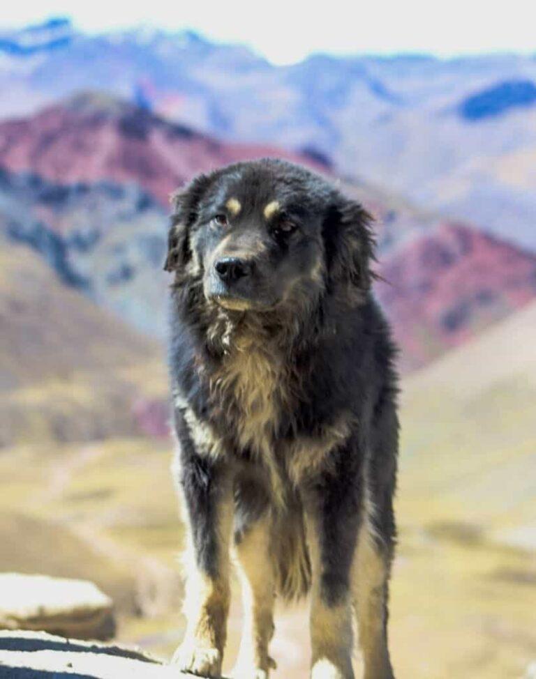 rainbow mountain dog-min