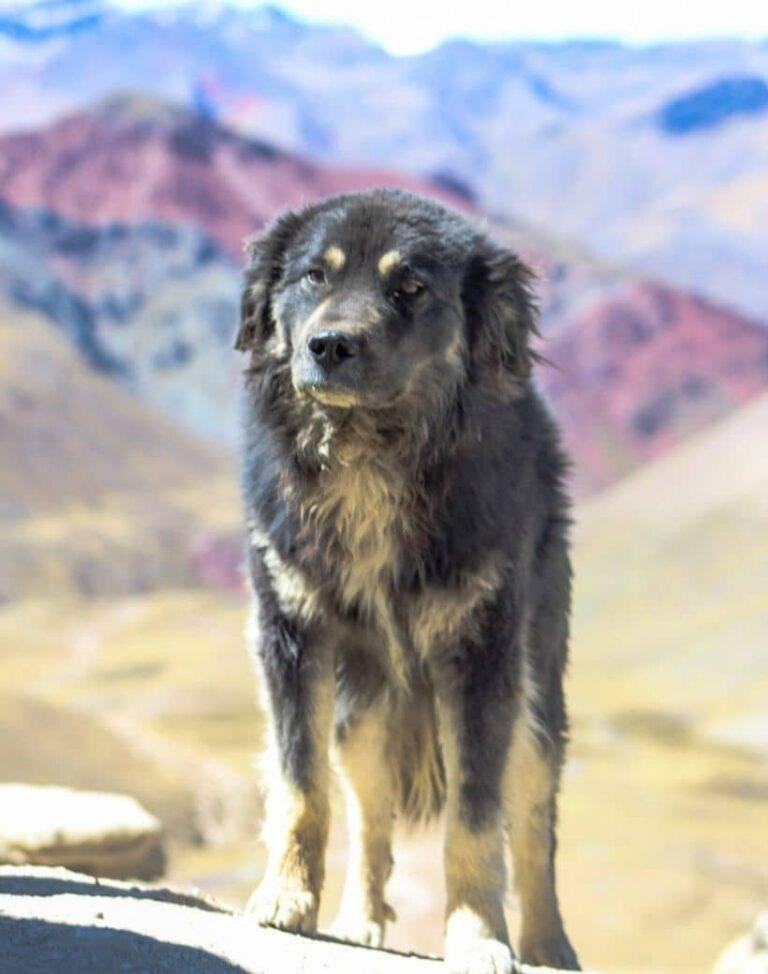 dog rainbow mountain-min
